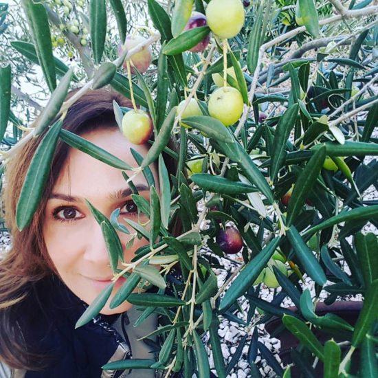 Klara olivy