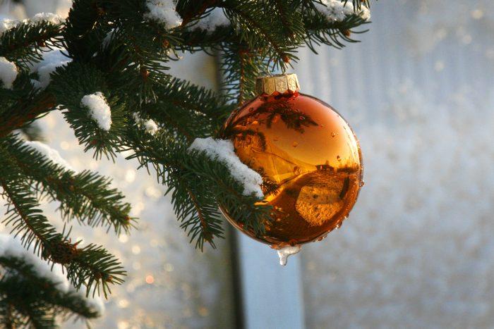 Vánoce v Botanické zahradě