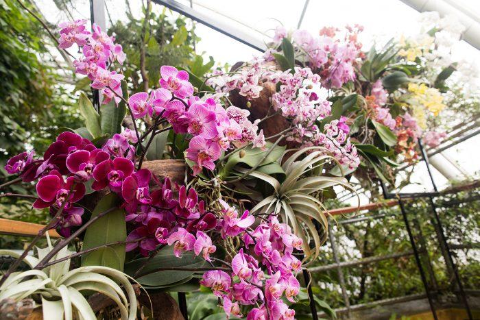 Výstava Orchidejí Botanická zahrada Praha (6)