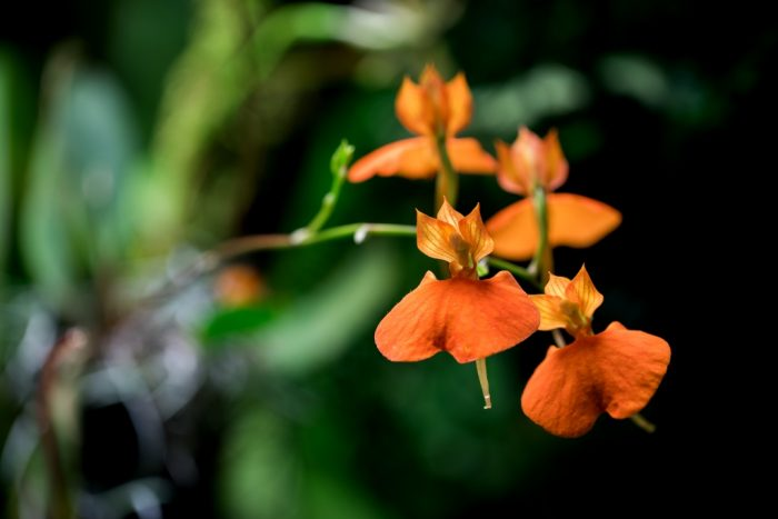 Výstava orchidejí (2)