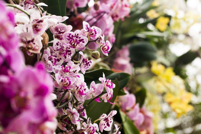Výstava orchidejí (3)