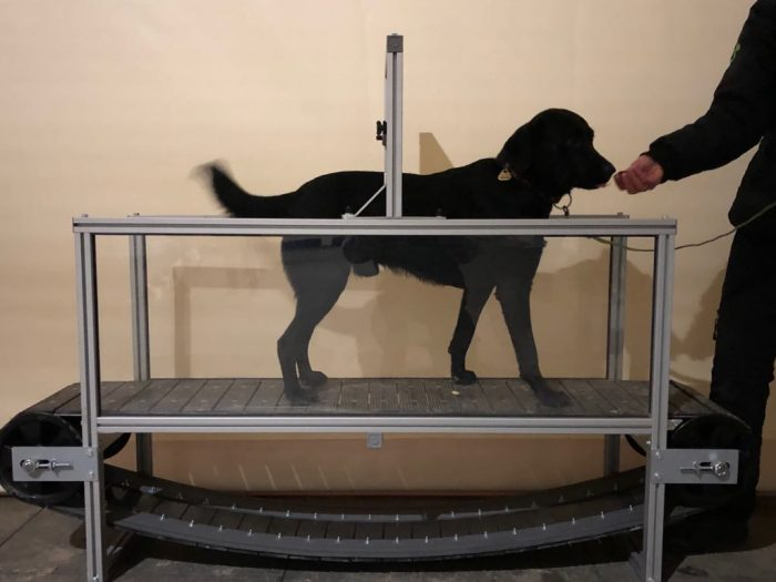 Chůze na treadmillu
