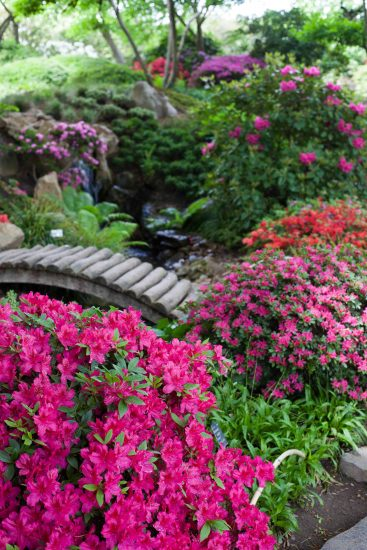 japonská zahrada_jaro_2